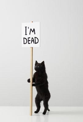 David Shrigley, I'm Dead, 2011, Private Collection, co Pictoright Amsterdam 2021