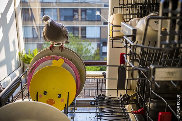 Ollie perches on a dirty plate as the photographer fills the dishwasher, while Dollie looks on from outside, in Vlaardingen, the Netherlands. By Jasper Doest